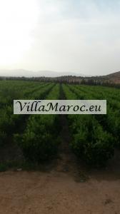 1.6 hectare grond met 700 manderijen bomen